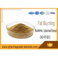 Nuciferine Lotus leaf Extract Pharmaceutical Raw Materials CAS 475-83-2 Fat Burning