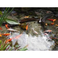 Professional Natural Zeolite Filter Media for Ponds with High CEC value