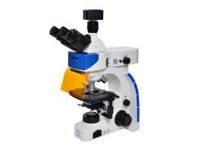 China LED Trinocular Upright Fluorescence Microscope with B & G Fluorescence Filter on sale