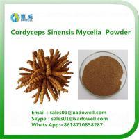 China High quality Cordyceps Sinensis Mycelia Powder on sale