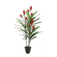 China Exotic Canna,Home Gardening, Indian Shot, Cannaceae, Flowering Reed on sale