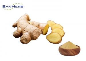 China High Efficiency Ginger Root Extract Powder , Zingiber Officinale Rosc By Supercritical CO2 Extraction on sale