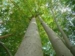 os fornecedores do pó da folha da árvore de moringa da venda por atacado da fonte da fabricação importam produtos da porcelana