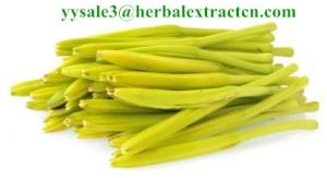 China High quality Hemerocall Extract 10:1  Chinese manufacturer, natural Antioxidant, Anti-Cancer property, Competitive price on sale