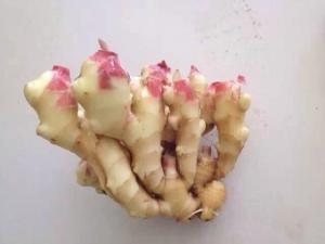 China chinese fresh ginger, new ginger 2015 on sale