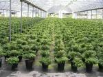 Potenciômetros pretos feitos sob encomenda 220CC redondo 75MM da planta para a flor e o tomate