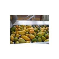 China Concentrated Mango Pulp Processing Machinery , 380V Voltage Jam Processing Equipment on sale