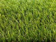 China Monofilament  Decorative forever green Artificial Grass / artificial turf on sale