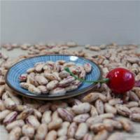Natural Organic Agro-products Processing Grade AA 200-240pcs/100g Light speckled kidney bean