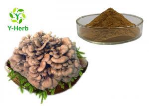 China Organic Maitake Mushroom Extract Polysaccharides Powder Grifola Frondosa Extract on sale