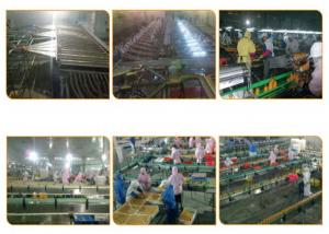 China Orange Processing Fruit Canning Equipment High Precision Custom Design on sale