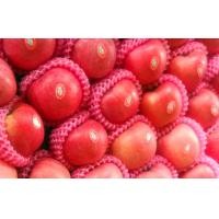 Small Sweet Fresh Organic Fuji Apple Contains Manganese For Cold Storage