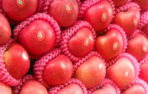 China Delicious Shandong Fresh Fuji Apple / Pome Fruit 8cm With Carbohydrates, Pale yellow flesh, compact flesh on sale