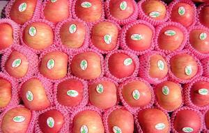 China Yantai Organic Fuji Apple With Bright Red Color , Fresh Pome Fruit 0.15 Kg on sale