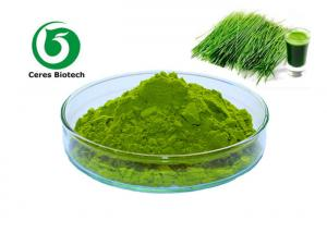 China Natural Dried Vegetable Powder Barley Grass Juice Powder 200 Mesh Hordeum Vulgare Linn on sale