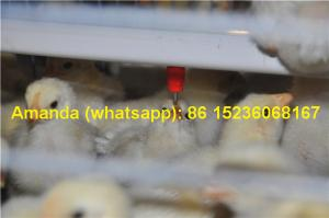 China Chicken Farming Hot Galvanized Cage H Type Battery Baby Chicken Cage & Small Chick Coop with 112 Birds for Iran on sale