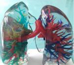 3d printing human organs medical anatomical model design teeth model