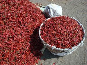 China Dried Red Chillies on sale