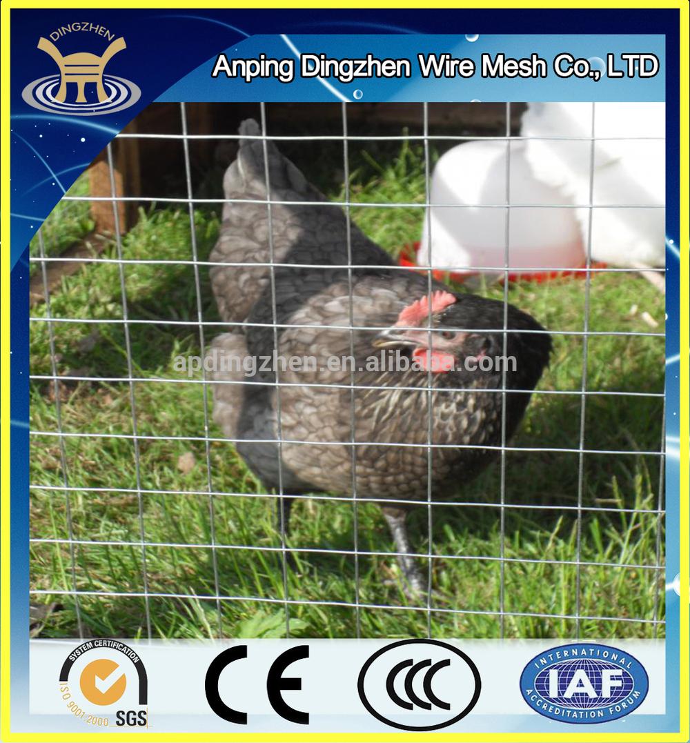 DZ-Welded wire mesh-49