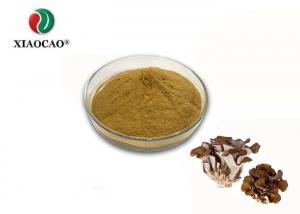 China Polypore Mushroom Organic Herbal Extracts Grifola Frondosa Powder 10-50% on sale