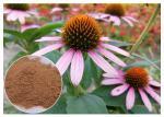 Echinacea pururea Antifungal Plant Extracts Polyphenol Powder Form Improving Immune System