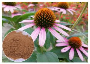China Anti-microbial anti-oxidation Echinacea pururea herb extract powder on sale