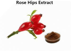 China Max 5% Moisture Fruit Extract Powder Brown Fine  Bulk Rosehip Extract Powder on sale