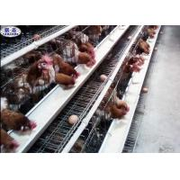 China A Type Poultry Farm Cage Steel Frame Easy Installation 3 Years Warranty on sale
