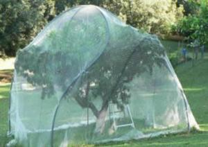 China Fruit Cage Netting on sale
