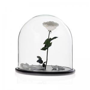 China D30 x H30cm Handmade Large Glass Display Box Dome Cloche With Wood Base on sale