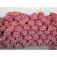 China Fresh red onion, organic rose onion peeled spicy vegetable, medium size,Chinese onion on sale