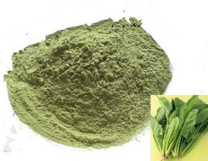 China Top Quality 100% Pure Spinach Powder Vegetable Powder Raw Food Factory Bulk Sale on sale