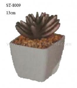 China Golden Artificial Succulent Flowers , Plastic Potted Mini Faux Succulents on sale