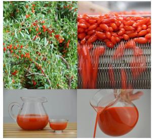 China 100% Puree Fresh Goji berry Juice Concentrate 2017 crop Origin NIngxia China  Goji Berries on sale