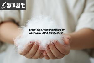 China Pena branca do ganso da boa qualidade e para baixo da cidade de Lu'an, província de Anhui on sale