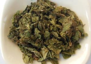 China Bulk herb Callicarpa formosana Rolfe Taiwan Beautyberry Leaf  zi zhu ye on sale