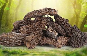 China Wild mushroom Morchella vulgaris whole part from Morchella deliciosa F organic food Yang du jun on sale