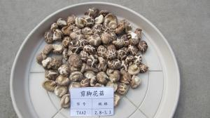China Natural Dry Shiitake Mushrooms Bulk Dried Mushrooms on sale