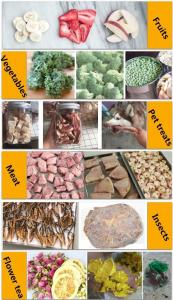 China Commercial Fruit Drying Machine Freeze Drying Lyophilizer Pricecommercial freeze drying machine on sale