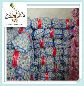 China Pure White Garlic Price 5p(200g) bulk fresh garlic garlic importer garlic wholesale on sale