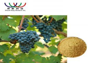 China Pure Grape Skin Extract Vitis Vinifera Powder , Resveratrol Plus Red Wine Extract on sale