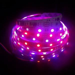 China DMX Control Digital magic dream color flexible led strip light on sale