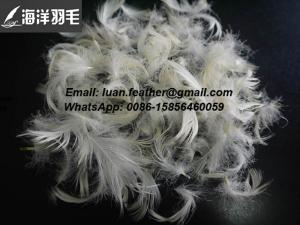 China China Anhui WASHED WHITE GOOSE FEATHER 2-4 CM on sale