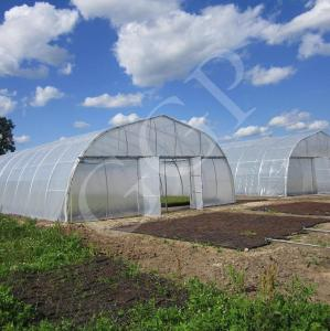 China Classic Standard Greenhouse Tunnel Plastic Sheet Covering Vegetable Growth on sale