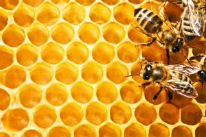 China Crude Beeswax on sale