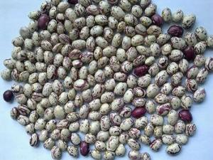 China xinjiang round light speckled kidney beans on sale
