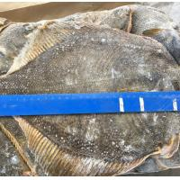 Wholesale Alaska waters frozen seafood frozen yellow fin sole fish for japanese sushi food good quality