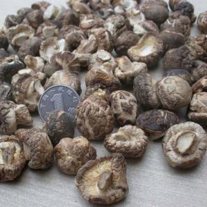 China Manufacturer Supply High Quality Dried Shiitake Mushroom/Dried Lentinus Edodes on sale