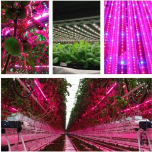 China T8 4 Feet Hydroponic Led Grow Lights For Vegetables / Flower , AC85-265V Input on sale