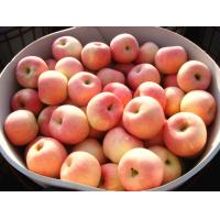 Big Sweet Organic Red Fuji Apple No Insect For Candy Apples